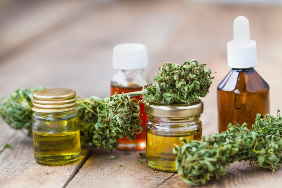 Cannabis buds and extracts