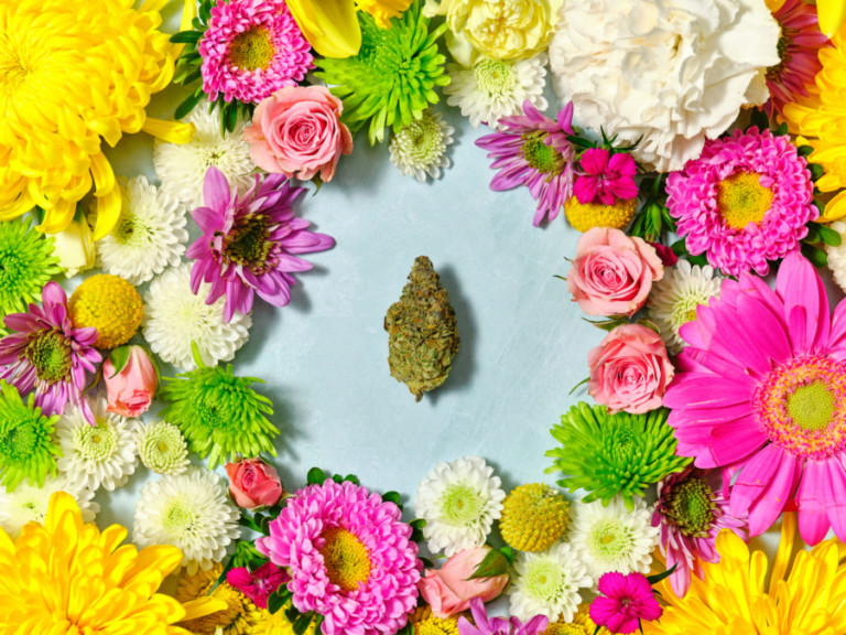 A cannabis bud set in the middle of various flowers